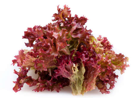 Red leaf lettuce on white background