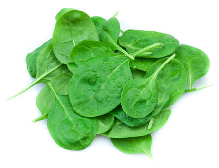 Baby spinach leaves   photo