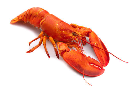 Lobster Stock Photo - 12102233