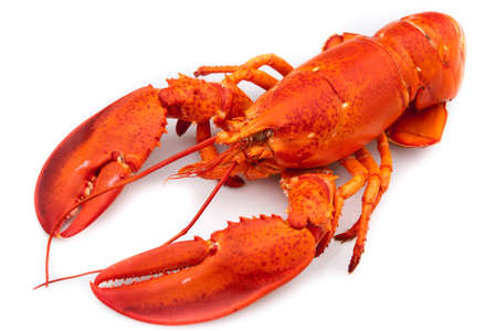 Lobster Stock Photo - 12102235