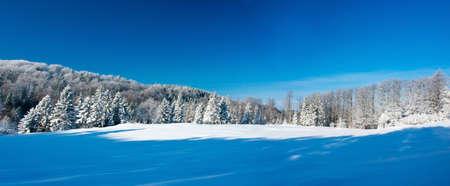 Winter panorama   photo