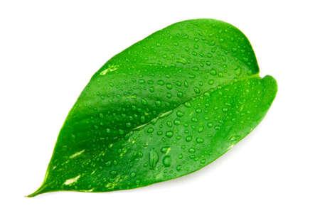 Goccia d'acqua su Leaf Archivio Fotografico
