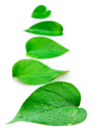 water on leaf: Line of leaves