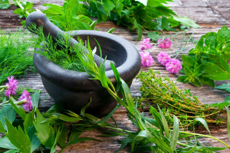 herbes de provence: Herbes fra�ches