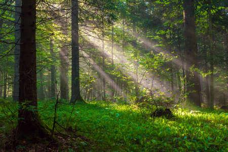 Morning Sunlight  photo