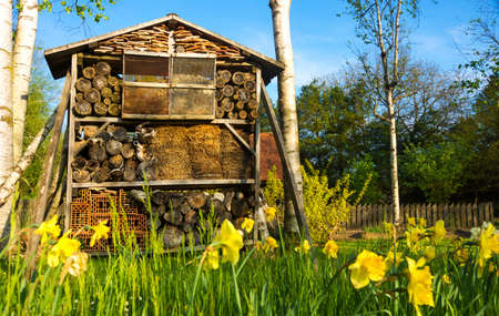 log house: Wooden insect house bug hotel