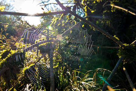 spiderweb: Spiderweb in forest