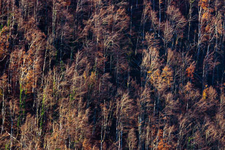 treeline: Aerial view of autumn forest. Stock Photo