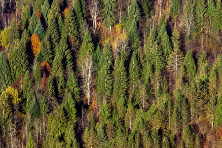 algonquin park: Aerial view of autumn forest. Stock Photo