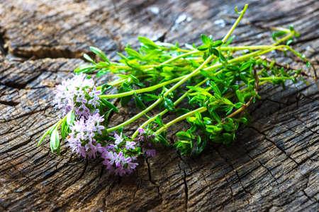 savory: Summer savory (Satureja hortensis)