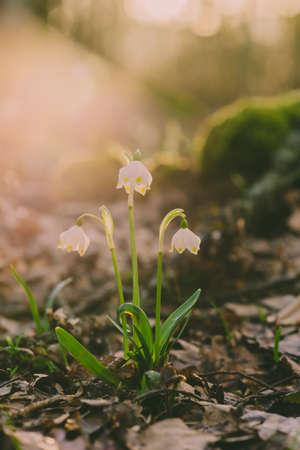 Early spring beautiful flowers Standard-Bild