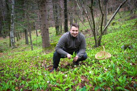 Man harvesting wild garlic