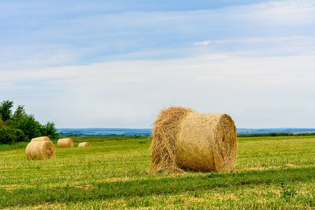 mown grass, dry grass twisted into bales, haystacks on the field