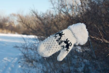lost children's mitten on a branch in winter on a Sunny frosty day