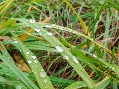 raindrops left on green grass leaves after rain in summer or spring, rainy weather, weather forecast with precipitation and showers, high humidity Banco de Imagens