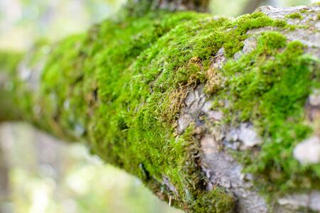 tree roots in southern forest covered with moss greenery, selective focus