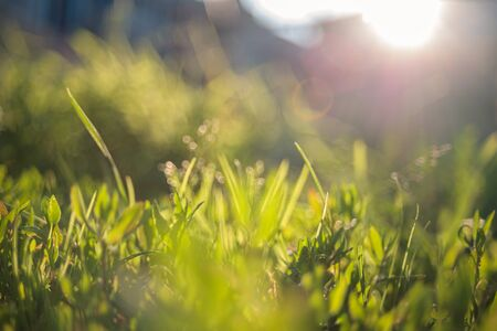 abstract blurred foreground background with close-up view of green lawn grass in contoured sunlight, selective focus, summer mood
