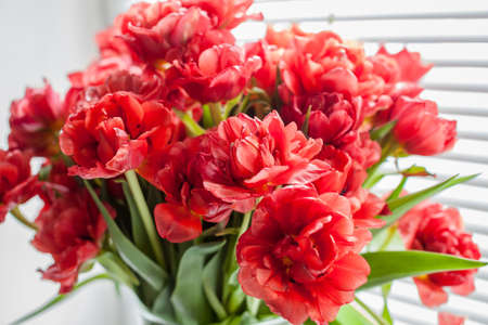 花束を持つウィンドウの赤いチューリップのクローズ アップのブラインドします。 写真素材