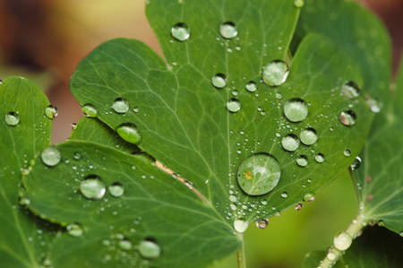 Drops of dew on leaves. Stock Photo