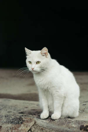 gray pattern: White street cat with green eyes on a black background. Stock Photo