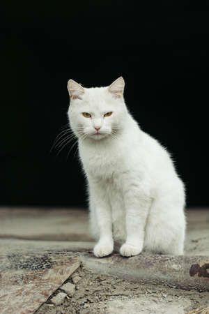 White street cat with green eyes on a black background. Stock Photo