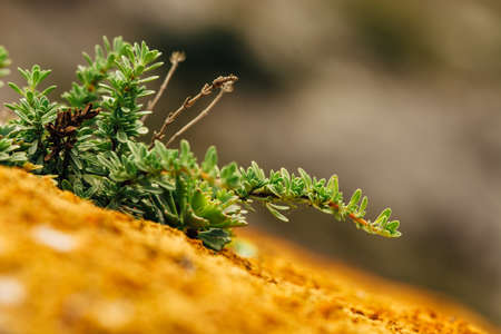 textured wall: Macro photography of succulents and mosses on the surface of the mountain.