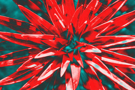 Crazy hallucinogenic. Abstraction, a flower of red color.