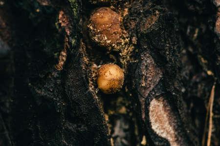 Texture of old pine close-up. Incredibly beautiful pattern. Mushroom grew on tree. Macro photography. Фото со стока
