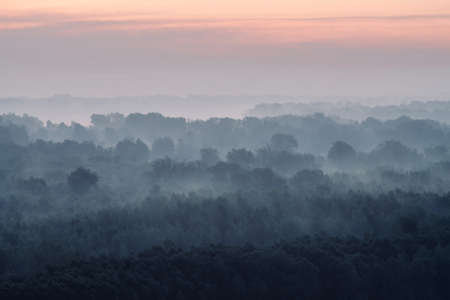 Mystical view on forest under haze at early morning. Eerie mist among layers from tree silhouettes in taiga under predawn sky. Atmospheric minimalistic landscape of majestic nature in faded blue tones Foto de archivo