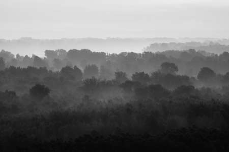 Mystical view on forest under haze at early morning. Eerie mist among layers from trees silhouettes in taiga in monochrome. Calm atmospheric minimalistic monochrome landscape of majestic nature. 版權商用圖片