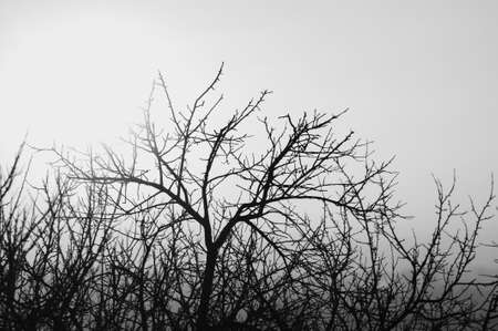 Minimalist landscape in grayscale with deciduous tree without foliage with elegant thin black branches on clear smooth sky close up. Beautiful tree in winter time with copy space in monochrome. Фото со стока