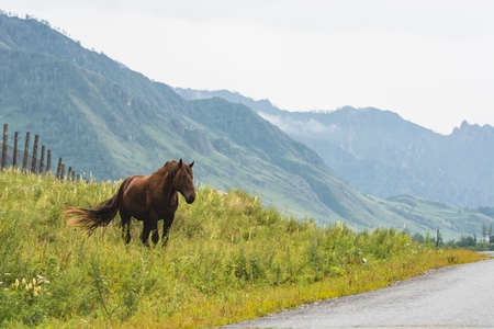 Horse grazes on lawn on background of misty mountains under cloudy sky. Brown foal close up with copy space. Mountain landscape with haze on horizon. Overcast weather. Livestock in nature.