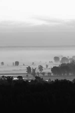 Mystic view on forest under haze at early morning in grayscale. Mist among tree silhouettes near water under predawn sky. Monochrome calm morning atmospheric minimalistic landscape of majestic nature. Banco de Imagens
