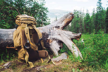 Big beige camping backpack with metal mug near tree against conifer forest before mountain. Active rest in mountains. Hiking on nature. Trekking in highland. Coniferous trees. Amazing leisure activity 版權商用圖片