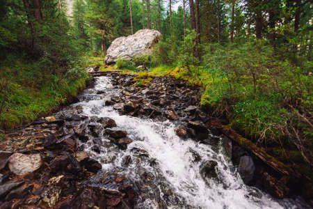 Wonderful fast water stream in wild mountain creek. Amazing scenic green forest landscape. Rich vegetation and big stone near brook. Atmospheric scenery of highlands. Beautiful mountains nature.