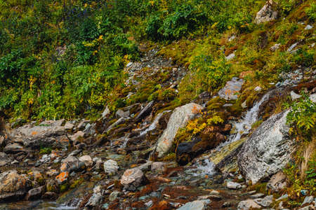 Rich flora of highlands. Red and green mosses, colorful plants, lichens, small waterfall from rock. Spring water on mountainside. Amazing natural background with beautiful vegetation of mountains. Archivio Fotografico