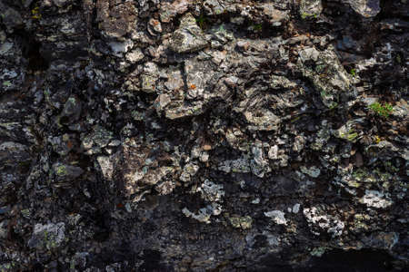 Plane of dark gray boulder. Beautiful rough rock surface close up. Colorful textured stone. Amazing detailed background of highlands boulder with mosses and lichens. Natural texture of mountain stone. Stock Photo