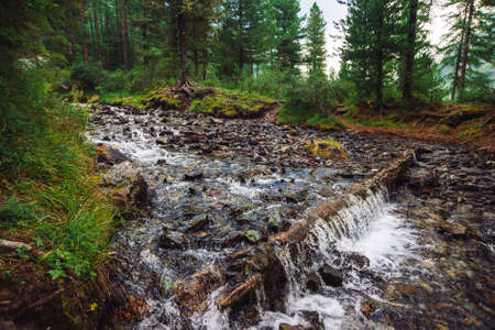 Wonderful fast water stream in wild mountain creek. Amazing scenic green forest landscape. Rich vegetation near brook. Small waterfall. Atmospheric scenery of highlands. Beautiful mountains nature.