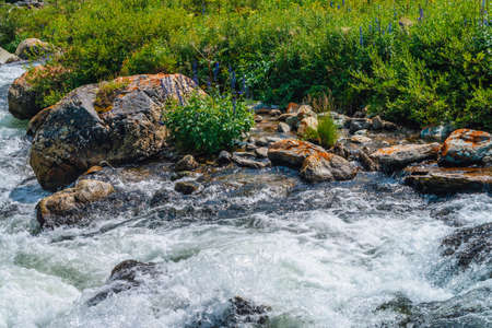 Beautiful vegetation near mountain creek in sunlight. Big boulders in fast water stream close-up. Background of rapids of river in sunny day. Fast flow near wet stones. Rich flora of highlands. Imagens