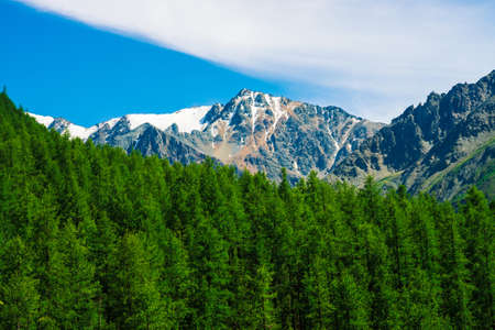Snowy mountain top behind wooded hill under blue clear sky. Rocky ridge above coniferous forest. Atmospheric minimalistic landscape of majestic nature.