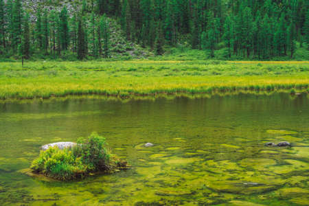 Trees on hill near calm clean water. Bottom of swampy backwater of mountain lake. Ideal smooth transparent water surface. Rich vegetation on stone. Green atmospheric natural background of highlands. Фото со стока