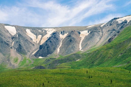 Giant gray rocky mountainside with dirty snow above green valley with coniferous trees in sunny day under blue sky. Amazing highland landscape of majestic nature.