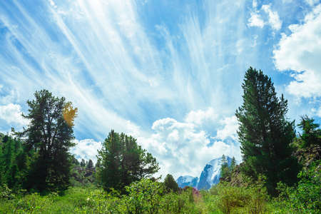 Amazing vivid blue sky with gentle clouds above snowy mountain range behind high conifer trees in sunlight. Wonderful sunny day. Picturesque minimalist landscape of majestic nature of highlands. 写真素材
