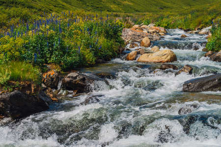 Beautiful blue flowers near mountain creek. Big boulders in fast water stream close-up. Rapids of river with copy space. Fast flow near wet stones. Background of clean waves. Rich flora of highlands.