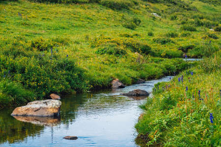 Spring water stream in green valley in sunny day. Rich highland flora. Amazing mountainous vegetation near mountain creek. Wonderful paradise scenic landscape. Paradisiacal sunny picturesque scenery. Imagens