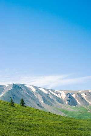 Giant mountains with snow above green valley in sunny day. Meadow with rich vegetation and trees of highlands in sunlight. Amazing mountain landscape of majestic nature.