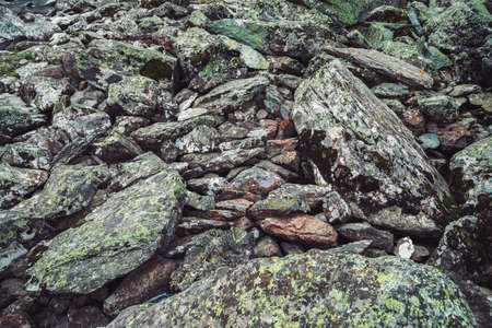 Multicolored boulder stream. Loose rock close up. Randomly scattered stones in nature. Amazing detailed background of highlands boulders with mosses and lichens. Natural texture of mountain terrain. 写真素材
