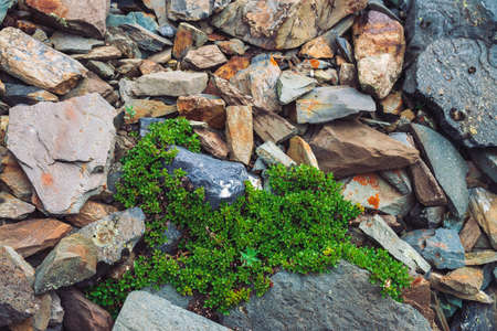 Multicolored boulder stream. Loose rock close up. Plants among randomly scattered stones. Amazing detailed background of highlands boulders with rich vegetation. Natural texture of mountain terrain. Foto de archivo