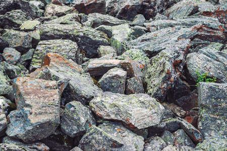 Multicolored boulder stream. Loose rock close up. Plants among randomly scattered stones. Amazing detailed background of highlands boulders with mosses and lichens. Natural texture of mountain terrain