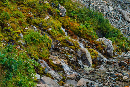 Rich flora of highlands. Red and green mosses, colorful plants, lichens, small waterfall from rock. Spring water on mountainside. Amazing natural background with beautiful vegetation of mountains. Stok Fotoğraf